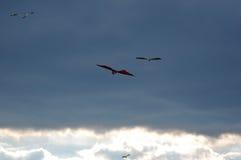 Papagaios no céu 4 Fotografia de Stock