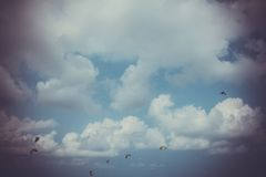 Papagaios no céu em cores retros Foto de Stock