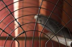 Papagaios ondulados Fotografia de Stock Royalty Free
