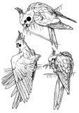 Papagaios três Imagens de Stock Royalty Free
