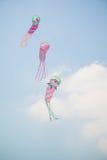 Papagaios triplos Fotos de Stock Royalty Free