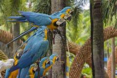 Papagaios tropicais Fotografia de Stock Royalty Free
