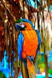 Papagayo Images libres de droits