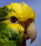 Papagei 2 Stockfoto