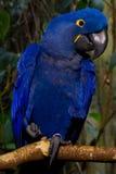 Papagei Stockfoto