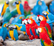 Papagei Lizenzfreie Stockfotos