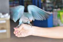 Papagei Stockfotografie