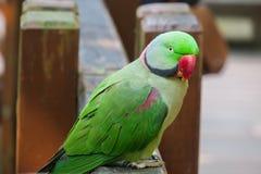 Papagei foto de archivo
