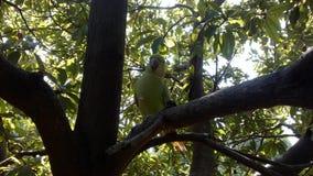Papagei auf Baum Lizenzfreie Stockbilder