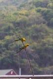 Papagei auf Betty-Fischen Lizenzfreies Stockfoto