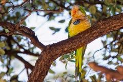 Papagei auf dem Baum in Ciutadella-Park in Barcelona lizenzfreie stockfotos