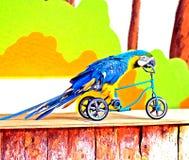 Papagei auf dem Fahrrad Stockbild