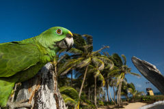 Papagei auf dem Strand vor Palmen Lizenzfreie Stockfotos