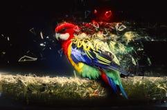 Papagei auf der Niederlassung, abstraktes Tierkonzept Stockfoto