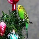 Papagei auf einem Baum des neuen Jahres lizenzfreie stockbilder