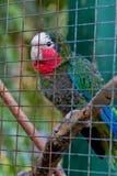 Papagei auf einem Glied lizenzfreies stockbild