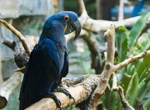 Papagei auf einem Zweig Stockfoto