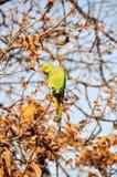 Papagei auf einem Zweig Stockfotos