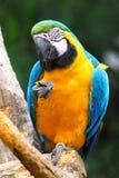 Papagei auf Stange Stockfoto