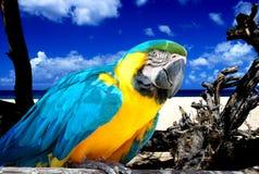 Papagei auf tropischem Strand Stockfoto
