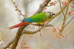 Papagei auf Zweig stockfoto