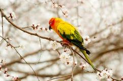 Papagei auf Zweig stockbild