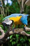 Papagei Bali Lizenzfreie Stockfotos