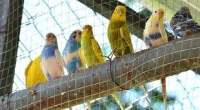 Papagei bunt Stockbild