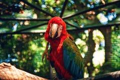 Papagei in casella Zoo Mauritius Stockfotos