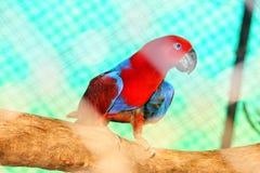 Papagei, der auf Niederlassung sitzt stockbild