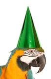Papagei, der einen Geburtstagsfeierhut trägt stockbild