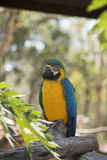 Papagei, der entlang der Leute anstarrt Stockbilder