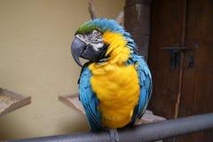Papagei an der Uhr Stockfotografie