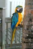 Papagei durch Baum lizenzfreie stockbilder