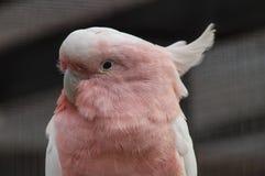 Papagei in einem russischen Zoo Lizenzfreies Stockbild