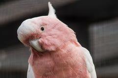 Papagei in einem russischen Zoo Lizenzfreie Stockfotos