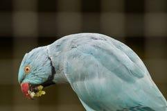 Papagei in einem russischen Zoo Stockbild