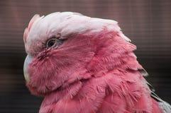 Papagei in einem russischen Zoo Stockbilder
