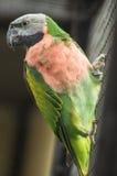 Papagei in einem russischen Zoo Lizenzfreies Stockfoto