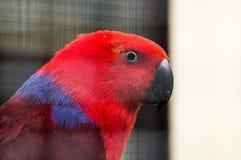 Papagei in einem russischen Zoo Stockfotos