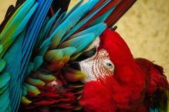 Papagei in einem russischen Zoo Stockfoto