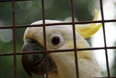 Papagei hinter dem Birdcage lizenzfreie stockbilder