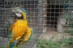 Papagei im Käfig Stockbild