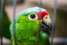Papagei im Käfig stockbilder
