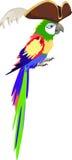 Papagei im Piratenhut Lizenzfreies Stockfoto