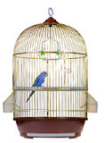 Papagei im Rahmen Stockbilder