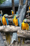 Papagei im Zoo Thailand, Safariwelt Lizenzfreies Stockfoto
