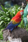 Papagei im Zoo Thailand, Safariwelt Lizenzfreies Stockbild