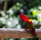 Papagei ist so schön Lizenzfreie Stockfotos
