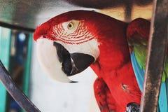 Papagei in Korfu Lizenzfreie Stockbilder